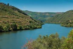 露台的葡萄园在杜罗河谷女低音杜罗河酒地区亦不 免版税库存照片