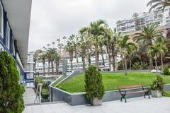 露天和棕榈树 免版税库存图片