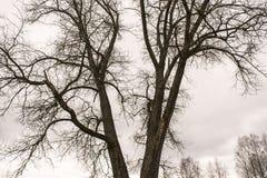 露天树 库存照片