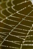 露水下落在一个蜘蛛网的作为背景 库存图片