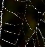 露水下落在一个蜘蛛网的作为背景 库存照片