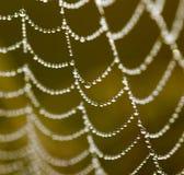 露水下落在一个蜘蛛网的作为背景 图库摄影