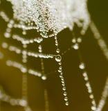 露水下落在一个蜘蛛网的作为背景 免版税图库摄影