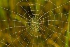 露水下落在一个蜘蛛网的作为背景 免版税库存照片