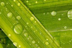 露水下落在一片绿色叶子的 库存照片