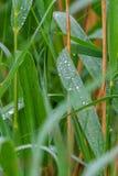 露水下落在叶子的早晨 免版税库存照片