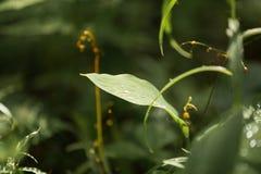 露水下落在叶子的 免版税库存照片