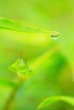 露水叶子 图库摄影