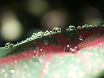 露水叶子 库存图片