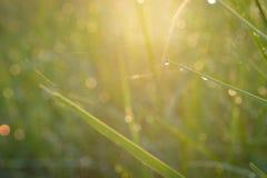 露水和水在与后边太阳光芒的绿草滴下 库存图片