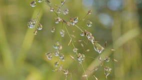 露水大下落在草的 在草的大水下落 库存图片