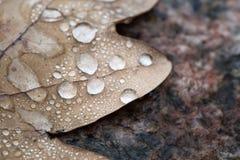露水宏指令下落秋天的生叶 库存照片