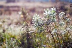 露水小下落在新鲜的绿草的早晨 免版税库存照片