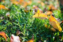 露水小下落在新鲜的绿草的早晨 库存照片