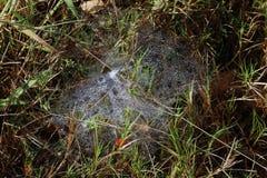 露水早晨下落在一个蜘蛛网的在早晨草上,背景在草自然,与d的背景新鲜的草的露滴 库存图片
