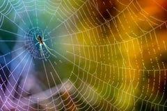 露水早晨下落在蜘蛛网 在露滴的蜘蛛网 在宏观自然的美好的颜色 图库摄影