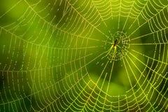 露水早晨下落在蜘蛛网 在露滴的蜘蛛网 在宏观自然的美好的颜色 库存照片