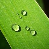 露水绿色叶子宏指令 库存照片