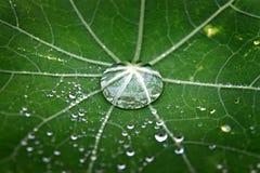 露水绿色叶子 库存照片
