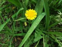 露水,花,自然 免版税库存照片