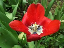 露水,花,自然 库存图片