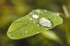 露滴的宏观射击在叶子细节的 免版税库存照片