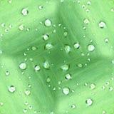 露滴绿色叶子模式 图库摄影