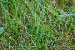露滴背景在绿草的 湿草的雨 免版税库存图片