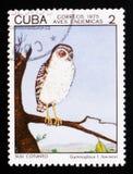露腿的猫头鹰Gymnoglaux lawrenci,土产鸟serie,古巴人大约1975年 库存图片