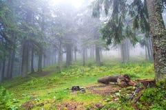 露营地在森林里 免版税库存图片