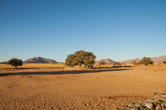 露营地在Sossusvlei,纳米比亚附近的沙漠 图库摄影