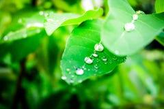 露水下落在叶子的早晨 免版税库存图片