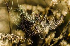 露水下落在网的在早晨光之前发光了 免版税库存图片