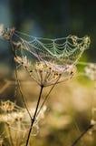 露水下落在网的在早晨光之前发光了 库存图片