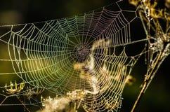 露水下落在网的在早晨光之前发光了 免版税库存照片
