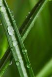 在草的露水 免版税图库摄影
