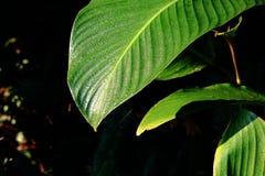 露水绿色叶子 图库摄影