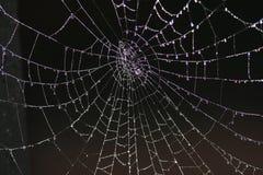 露水蜘蛛网 免版税库存照片