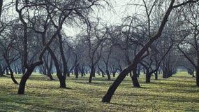 阴霾的苹果树 库存照片