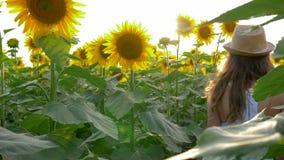 青少年的女孩享受在领域的乡下秀丽用在背后照明的向日葵 股票视频