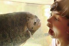 青少年的在水族馆的男孩嘲笑的鱼 免版税库存照片