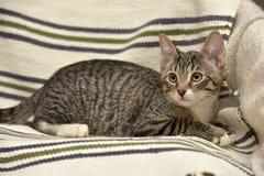青少年的小猫3个月 免版税库存照片