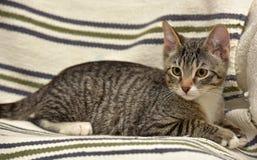 青少年的小猫3个月 库存照片