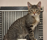 青少年的小猫3个月 库存图片