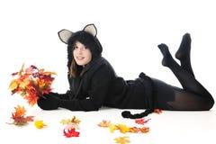 青少年的秋天猫,黑和美丽 免版税库存图片