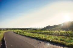 青山和葡萄园看法在一条路附近有阳光的在托斯坎乡下 库存图片