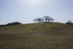 青山,春天在瑞典 人使用桃红色伞作为保护免受太阳,在小山顶部 免版税库存图片
