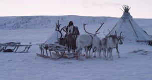 青年营惊人的夺取的住在那里,与驯鹿的录影和人们在寒带草原中间Yamal 股票视频