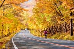 青森,日本- 2017年10月27日, :妇女乘驾自行车场面  免版税库存图片