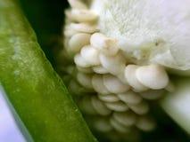青椒种子 库存照片
